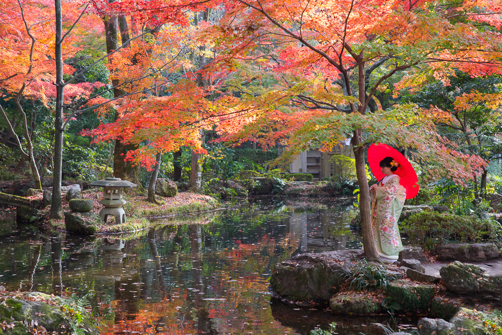 Lady in a Kimono in autumn leaves