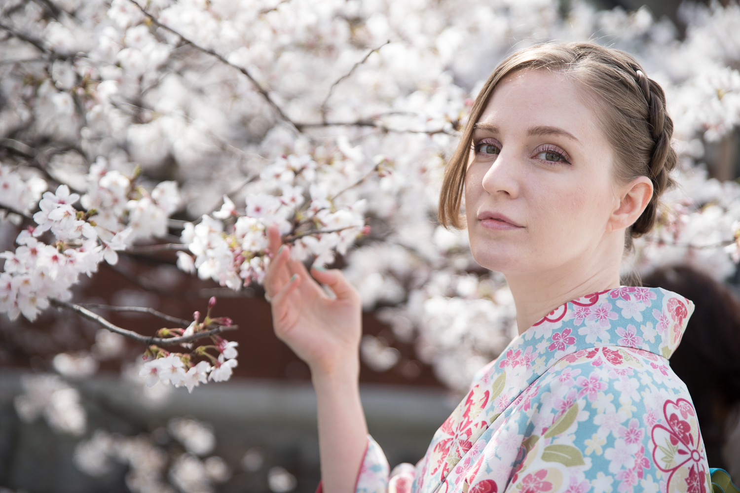 An Osaka-based model in a kimono in Kyoto during cherry blossom season