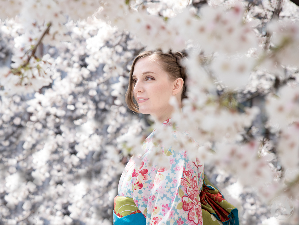Cherry blossoms in Gion Kyoto. Model: Brooke; Photographer: Andrew.
