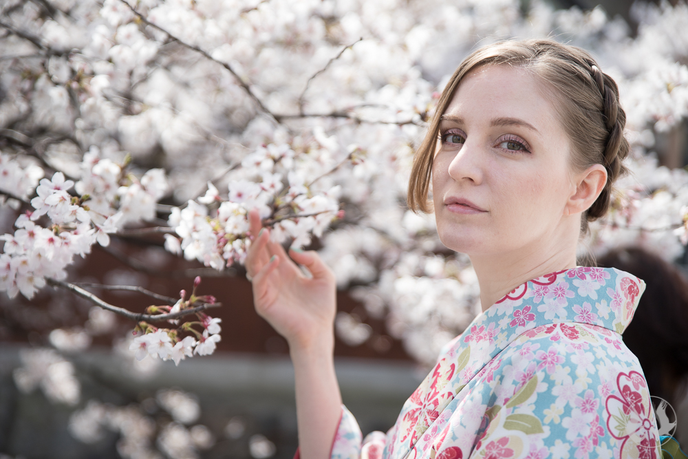 An American woman in a beautiful kimono under the cherry blossoms in Gion Kyoto