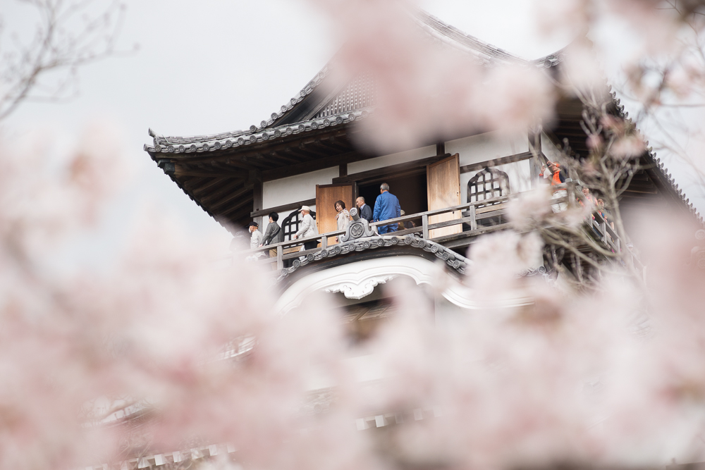Inuyama Castle during cherry blossom season